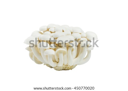 White beech mushrooms or Shimeji mushroom or Edible mushroom isolated on white background. (Hypsizygus marmoreus (Peck) Bigelow), Hon-shimeji.  - stock photo