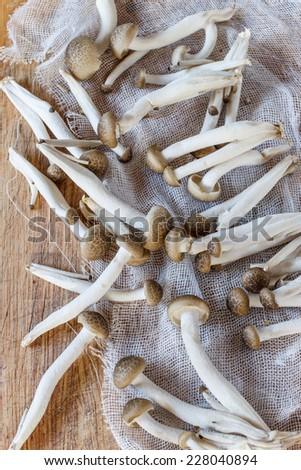 White beech mushrooms, Shimeji mushroom, Edible mushroom - stock photo