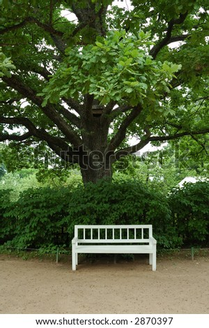 White bench under old tree in the park