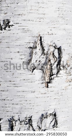 white birch bark macro background texture - stock photo
