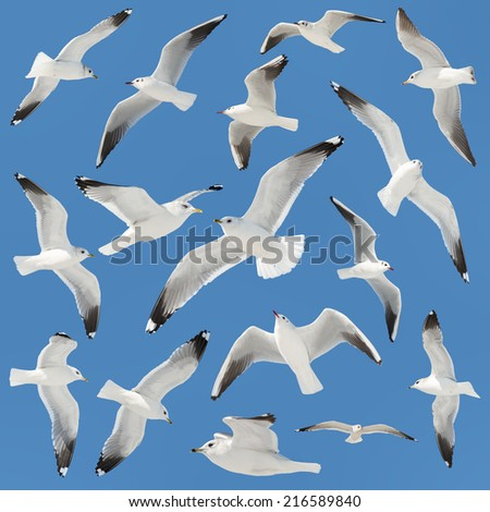 white bird collection on sky background - stock photo