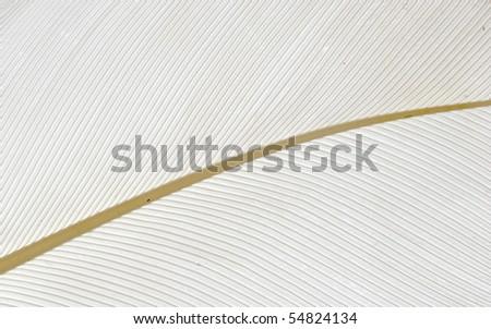 white bird feather texture background - stock photo