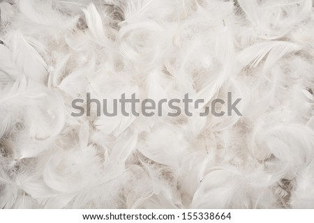 White bird feathers texture for background