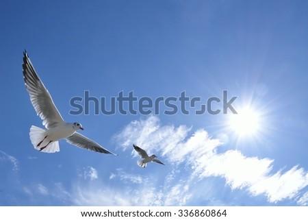 White bird flying blue sky - stock photo