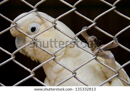 White bird in a cage.