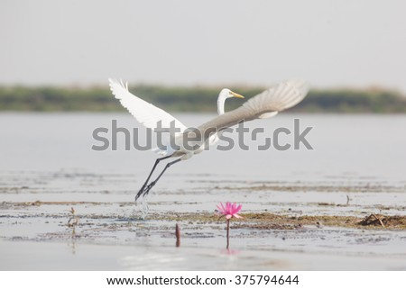 White Bird wing on water, Selective Focus. - stock photo