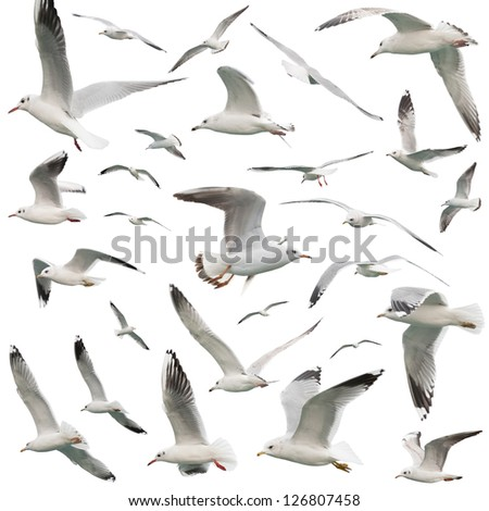 white birds set. isolated on white - stock photo