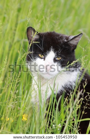 White black cat on meadow - stock photo