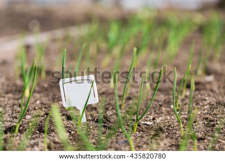 White blank plastic board at garden beds with small sprout plants - stock photo