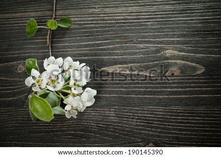 White blossom on a dark wooden background  - stock photo