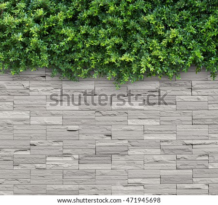 White brick wall  with Green leafs