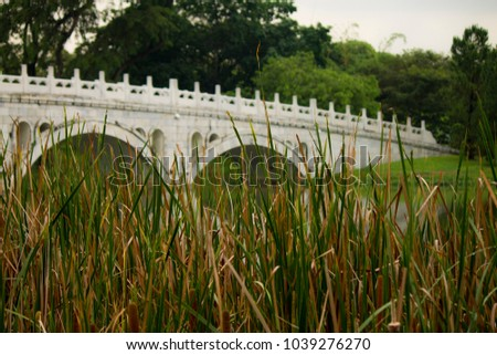 White bridge of the Japanese Garden of Singapore with reeds in the foreground