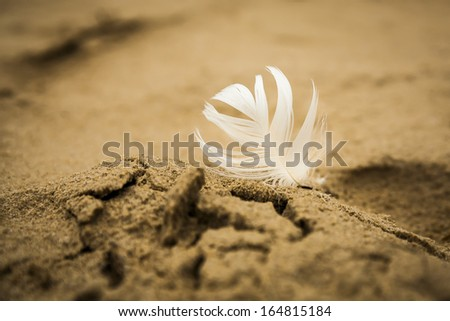 White bright feather pressed into the sand on the beach, wind gusts on bird feather. - stock photo