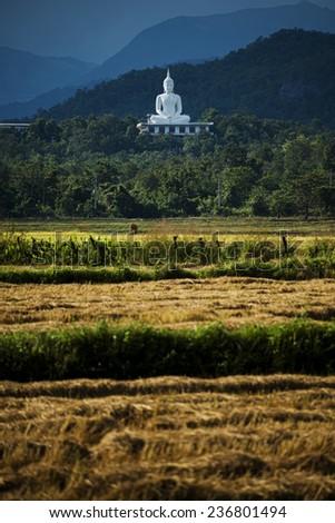 white buddha on the hill - stock photo