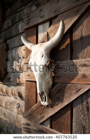 White bull skull hanging on a farm wooden barn wall. Dead animal head decoration of a western style bar - stock photo