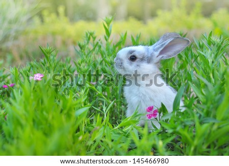 White bunny - stock photo