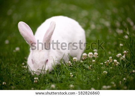 White Bunny, Grass Field, Easter