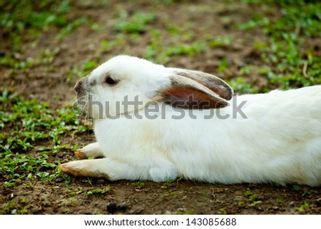 White bunny lying on the ground. - stock photo