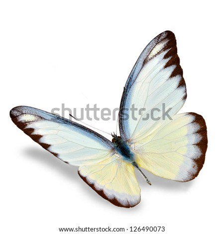 White Butterfly flying  isolated on white background, Soft shadow underneath.
