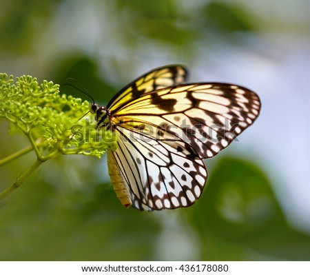 White butterfly on the flower - stock photo