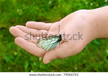 White butterfly with black stripes and folded wings to children's hands on a background of green grass - stock photo
