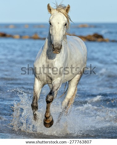 horse running beach stock images royaltyfree images
