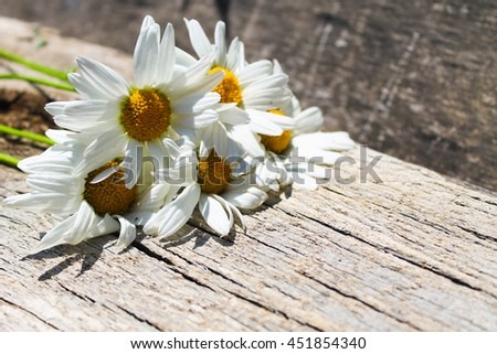 White camomile flowers on the wooden background - stock photo