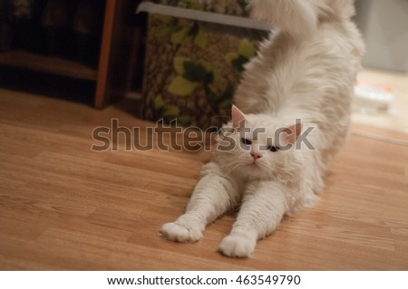 stretching cat stock images royaltyfree images  vectors