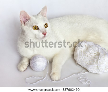 White cat (age 1 year) lies on a white background - stock photo