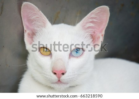 White cat, beautiful eyes, excited