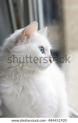 White cat by the window