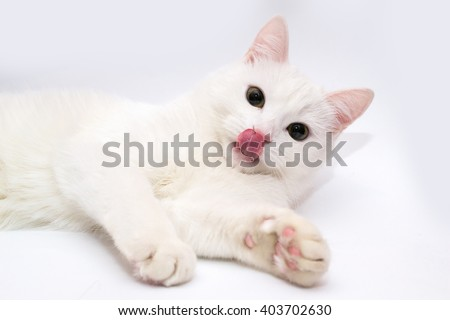 White cat. Cat stuck out his tongue. Cat's tongue. Cat on a white background.