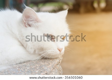 White cat crouching on a lonely stance