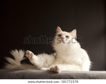 White cat in a funny pose - stock photo