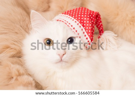 White cat in red hat - stock photo