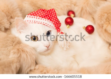 white cat in red hat with christmas ball - stock photo