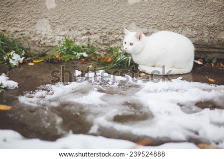 white cat in winter