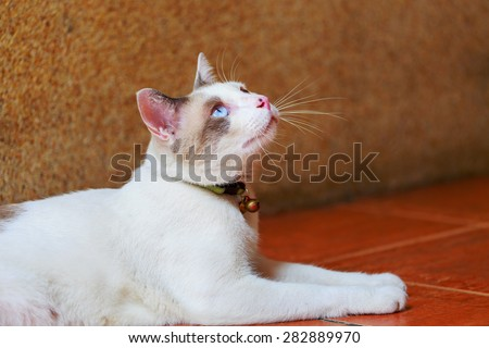 white cat lay down on tile floor