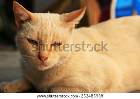 white cat looking