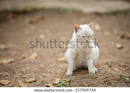 White cat looking prey on the ground - stock photo
