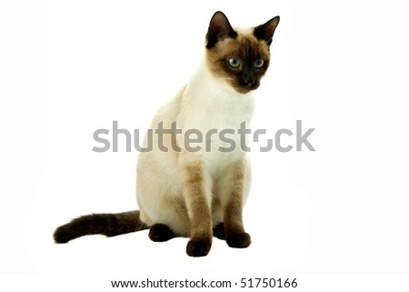 white cat looking right. On a white background