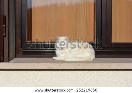 White cat lying at the window