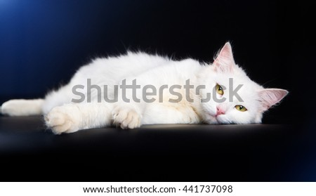 White cat lying on a black background