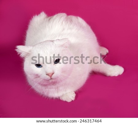 White cat lying on pink background