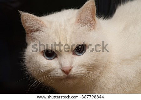 white cat on a black background