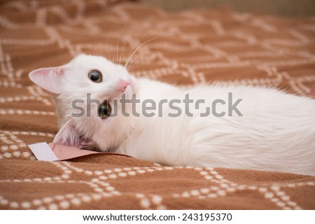 White cat on a brown blanket