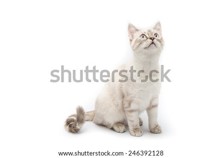 White cat on a white background - stock photo