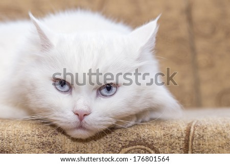 White cat on  couch - stock photo