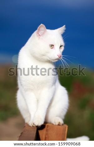 White cat on fence - stock photo