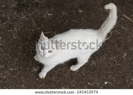 white cat on the grass looking up to camera, spring time - stock photo